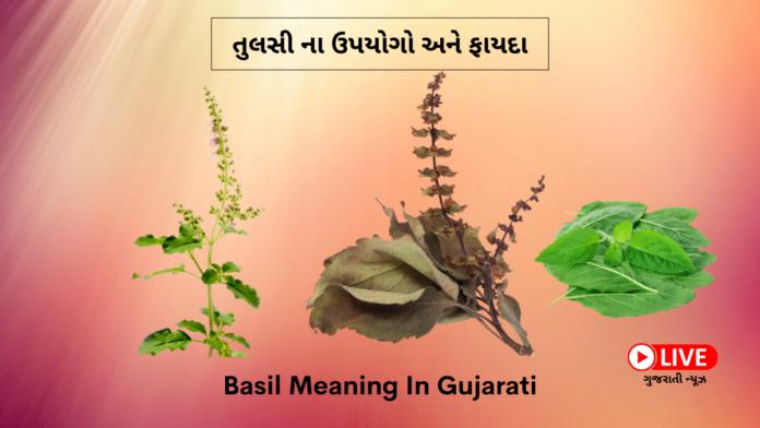 Basil Meaning In Gujarati, Basil Seeds Meaning In Gujarati, tulsi in gujarati, તુલસી ના ઉપયોગો, તુલસી ના ફાયદા, તુલસી ના ઔષધીય ગુણ, તુલસી નો ઉપયોગ કેવી રીતે કરવો, તુલસી ના ફાયદા ગુજરાતી માં, તુલસી એટલે શું