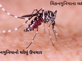 Chikungunya Kevi Rite Thay Che ચિકનગુનિયાના લક્ષણો, ચિકનગુનિયાની સારવાર અને ચિકનગુનિયાનો ઘરેલું ઉપચાર ગુજરાતી માં, Chikungunya in Gujarati.